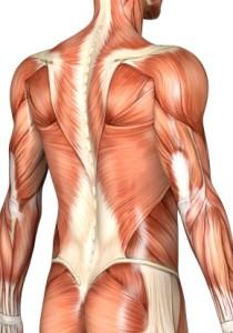 Tipos de dores musculares